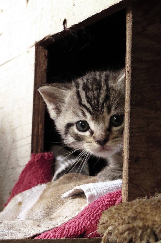 Kitten Pictures {2017}