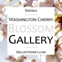 Washington Cherry Blossom Digitals